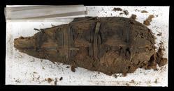An image of Bird mummy