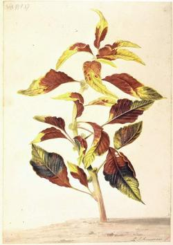 An image of Album